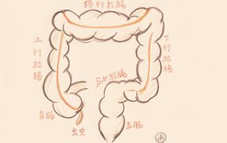 colon-rectum