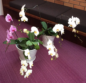 orchid_0722