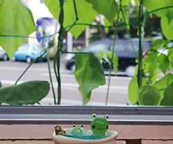 frog_bath