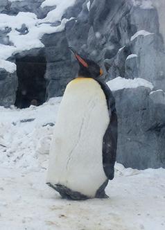 penguin1702