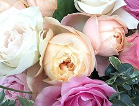flowersN