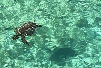 swiming