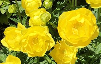 flowersY