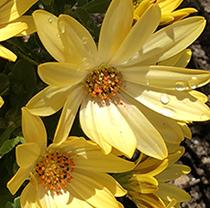 flowersY2