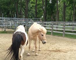 horsehip